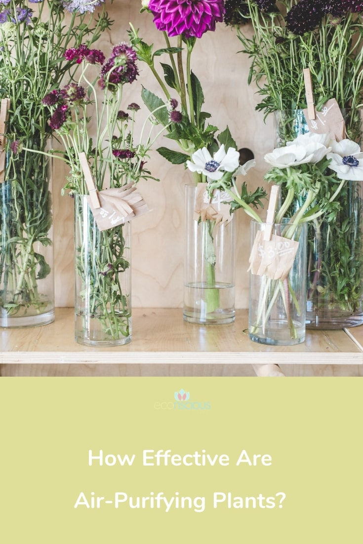 Pin How Effective Are Air-Purifying Plants to Pinterest
