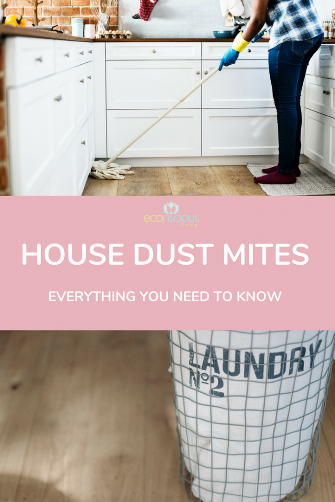 what you need to know about house dust mites
